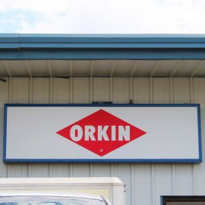 Orkin Translucent Face